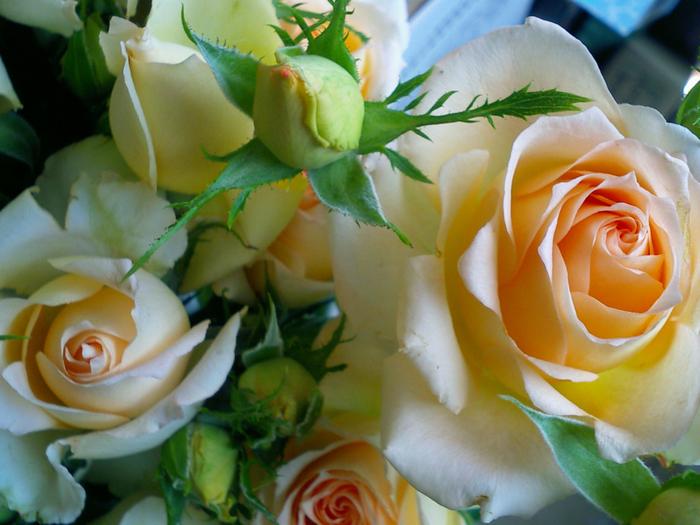 3 чайных розы (700x525, 369Kb)