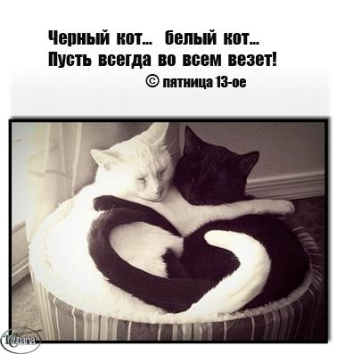 ч и б кот (378x397, 101Kb)