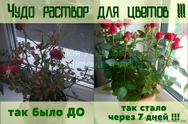 5283370_rozi (640x424, 180Kb)