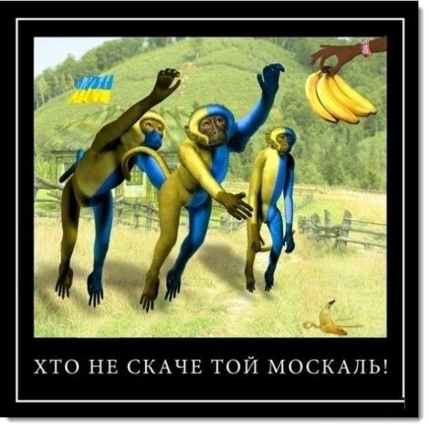 1463094171_kto-ne-skachet-tot-moskal (604x603, 236Kb)