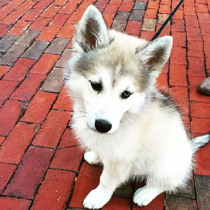 5462122_adorabledogs19 (700x700, 206Kb)