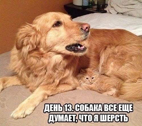 5462122_sobaki53 (499x442, 61Kb)