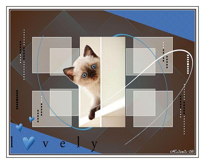 Miau1 (700x560, 61Kb)