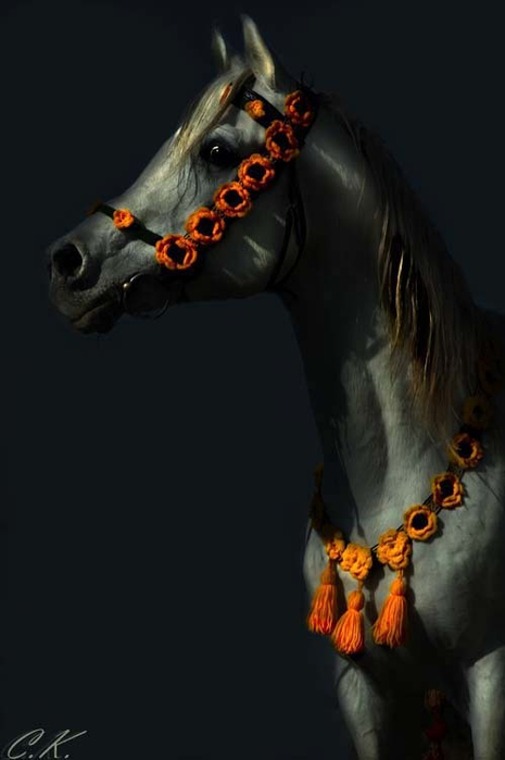 арабская лошадь4 (465x700, 131Kb)