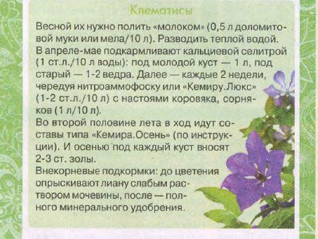 5996702_Podkormka_klematisi (453x341, 49Kb)