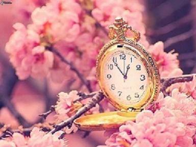 orologi-storici,-ciliegio-in-fiore,-ramoscello-fiorito-172908 (384x288, 46Kb)
