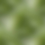 Превью 1469-3 (600x600, 37Kb)