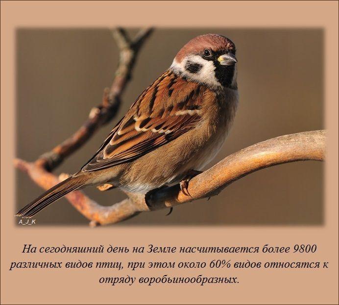 1363757960_www.radionetplus.ru-fact_02 (692x622, 61Kb)