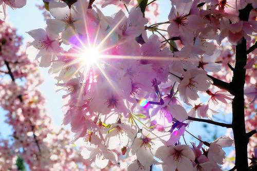 Лучше нету того цвету, когда яблони цветут!