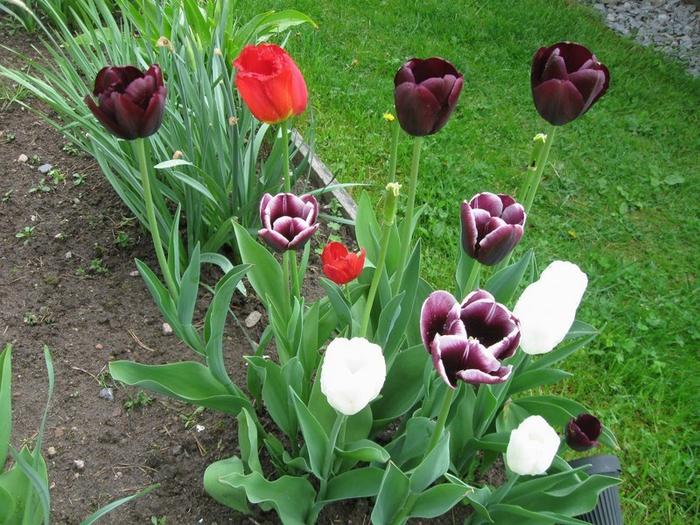� spring 028 (700x525, 485Kb)