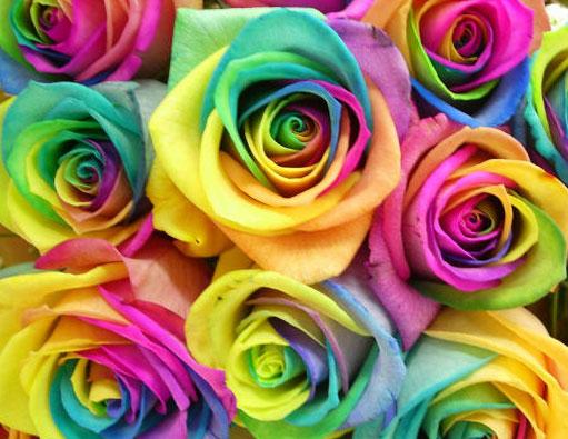 roza (511x395, 202Kb)