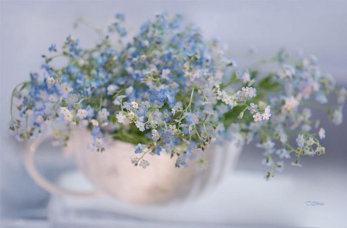 still_life_in_flowers_04 (700x461, 63Kb)