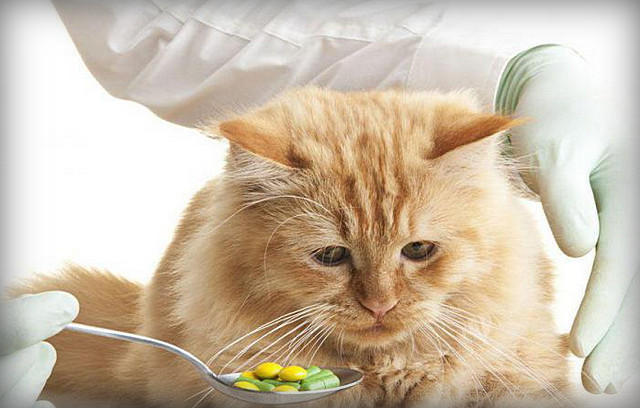 Кот давится едой