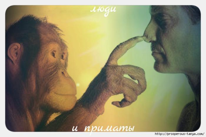 люди и приматы (700x467, 113Kb)