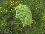������ Зонт Салатовый 1 (700x525, 450Kb)