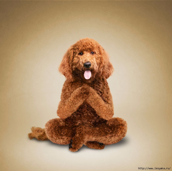 Фотографии животных, которые делают Йогу!