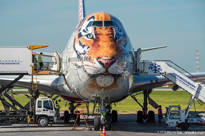 тигролет - самолет с головой тигра/3925073_16s (700x466, 262Kb)