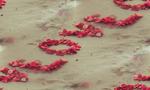 Превью love-romantic-sweet-petals (700x420, 291Kb)
