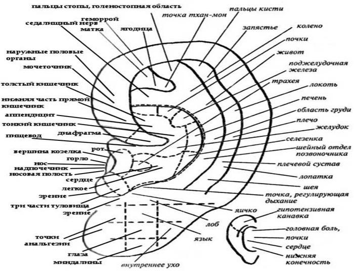 """alt=""""Точечный и оздоровительный массаж ушных раковин""""/2835299_TOChKI_NA_YHE (700x537, 142Kb)"""
