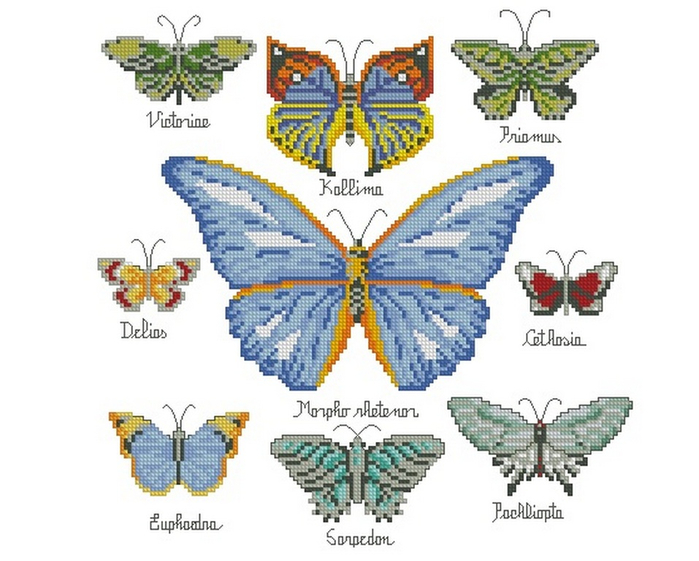 Butterfly Collection 4 (700x561, 276Kb)