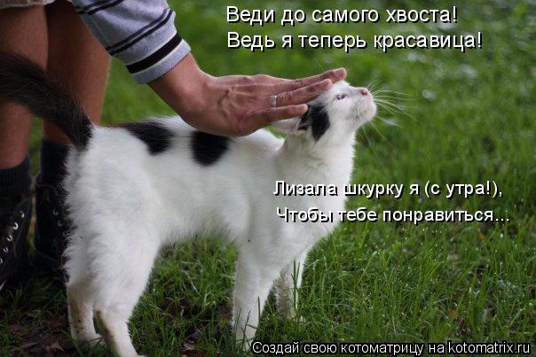 kotomatritsa__ (604x403, 239Kb)