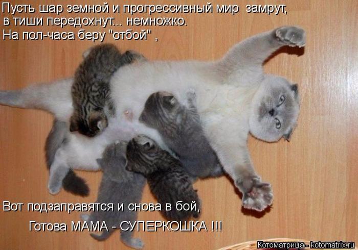 kotomatritsa_6 (700x490, 362Kb)