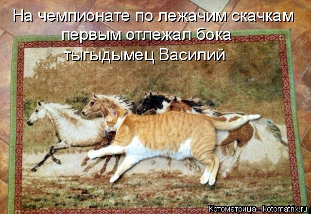 kotomatritsa_C (1) (640x441, 321Kb)