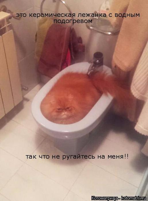 kotomatritsa_y (1) (515x700, 246Kb)