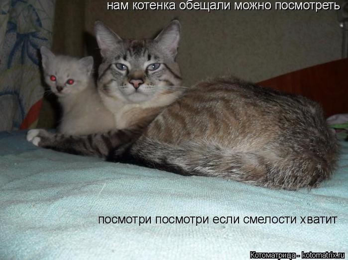 kotomatritsa_YL (700x524, 317Kb)