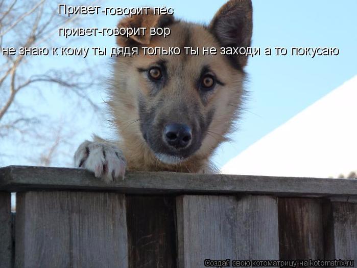 kotomatritsa_z (700x524, 300Kb)
