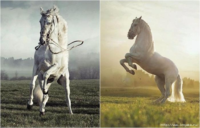 Сила и грация лошадей на потрясающих фотографиях Конрада Бонка!