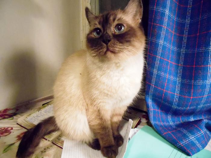 кошка Милли/3356707_milly_0472 (700x525, 232Kb)
