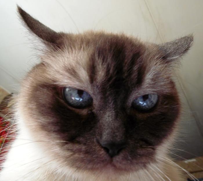 кошка Милли/3356707_milly_0038 (700x623, 178Kb)