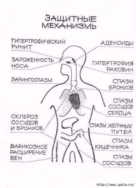 """alt=""""Лечение заболеваний с помощью уникальной дыхательной гимнастики Бутейко""""/2835299_ZAShITNIE_MEHANIZMI_1_ (435x599, 113Kb)"""