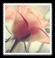 beautiful-flower-girly-pink-pretty-Favim (180x192, 48Kb)