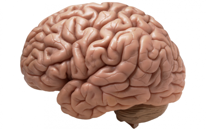 brain-990x622  РјРѕР·Рі (700x439, 339Kb)