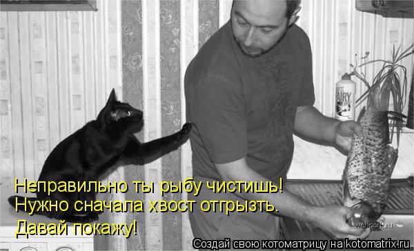 kotomatritsa_6H (600x364, 167Kb)