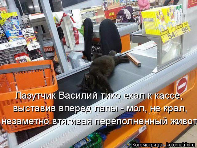 kotomatritsa_E (640x480, 361Kb)