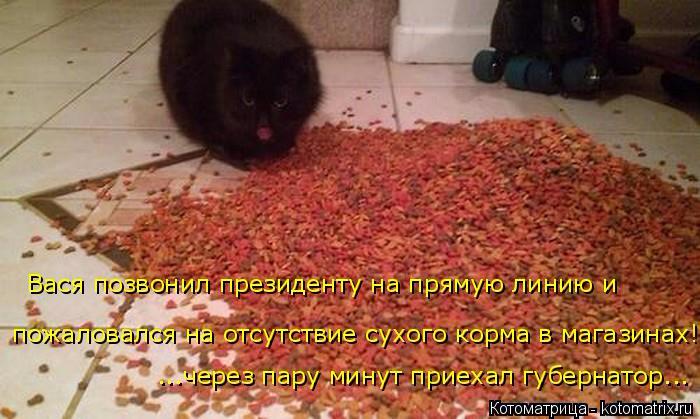 kotomatritsa_H (700x419, 315Kb)