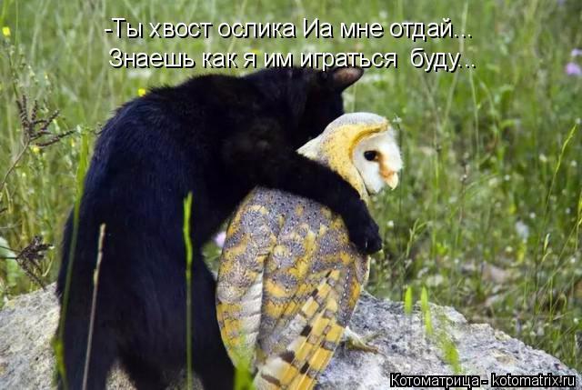 kotomatritsa_m (640x429, 253Kb)