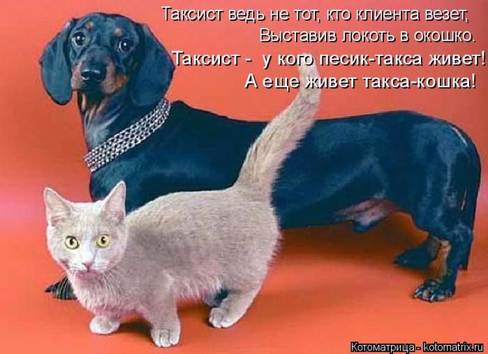 kotomatritsa_NT (700x507, 344Kb)