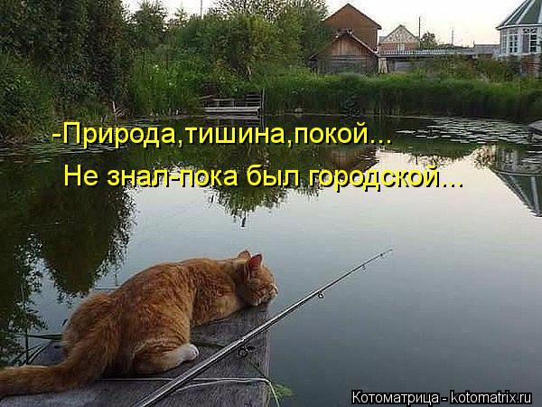 kotomatritsa_S7 (600x450, 282Kb)