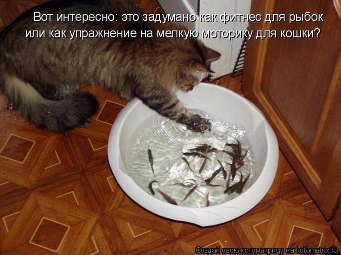 kotomatritsa_ta (700x524, 394Kb)