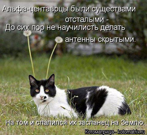 kotomatritsa_U (1) (500x461, 247Kb)