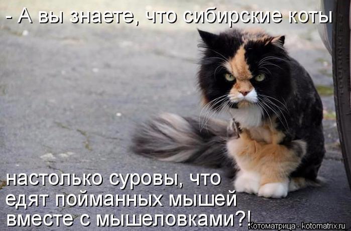 kotomatritsa_V (700x461, 284Kb)