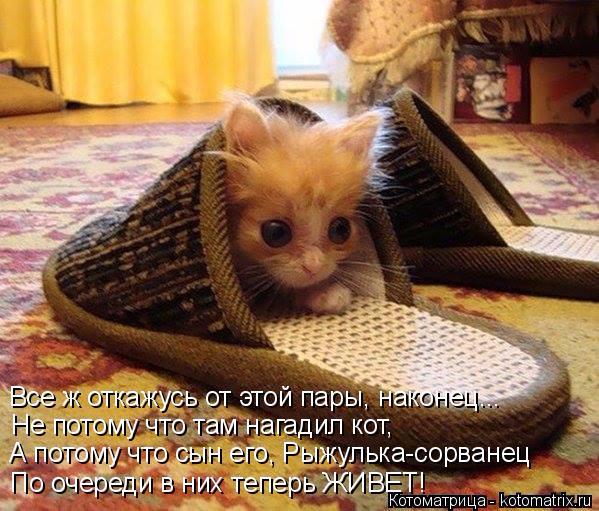 kotomatritsa_x (599x511, 356Kb)