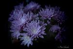 Превью 5248_by_phototubby-dbangfo (700x466, 226Kb)