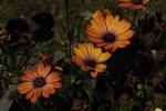 Превью full_bloom_by_finnyanne-dbco26f (700x466, 329Kb)