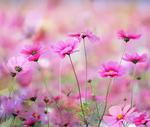 Превью happy_day_by_dashakern-db1e0am (700x592, 418Kb)