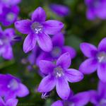 Превью purple_stars_by_larksgar-d7goie7 (600x600, 280Kb)